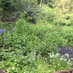 Woodland plants in The Glade